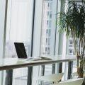 Озеленение офисов и квартир